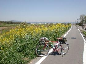 自転車道 大阪市 自転車道 : ... 自転車道で京都から大阪まで